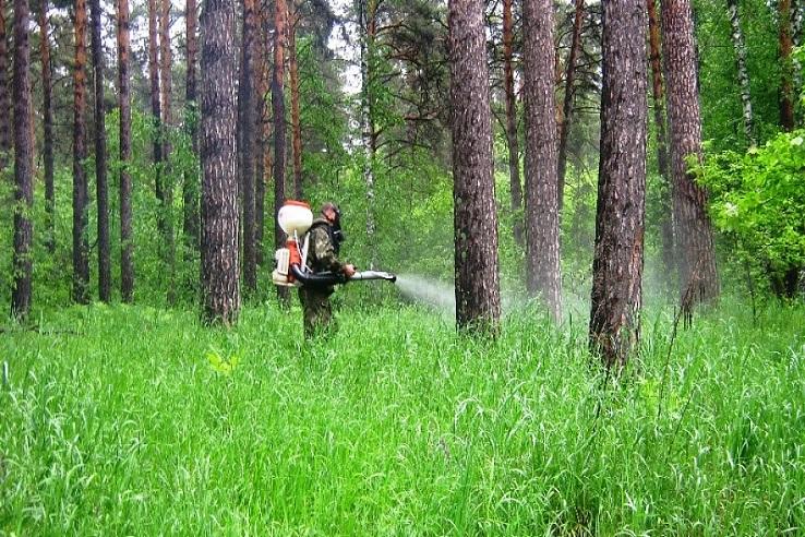 Обработка от клещей лесных массивов в Иваново